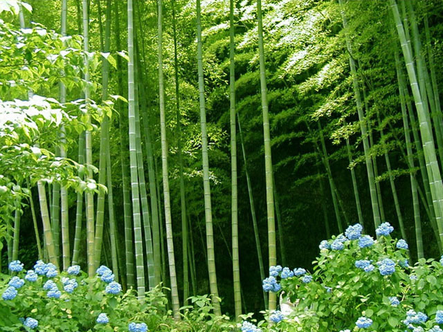 images729470_bamboo_forest_1