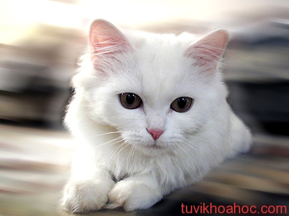 55160692-quyennl2108White_Cat